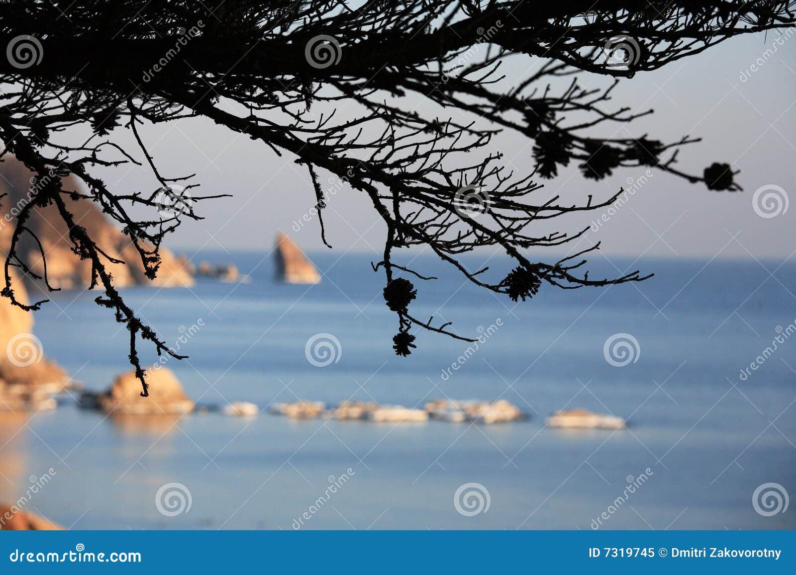 Mare di Giappone. Isola 11