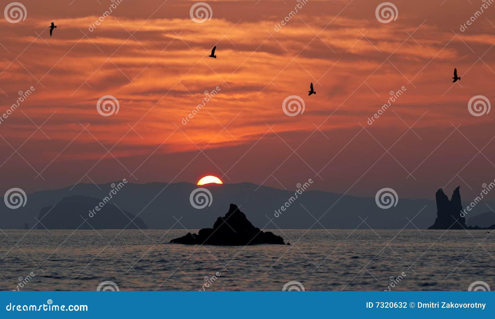 Mare di Giappone. Tramonto e gabbiani
