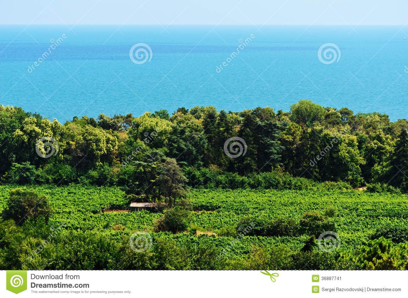 Download Mare, foresta, campo immagine stock. Immagine di nero - 36887741