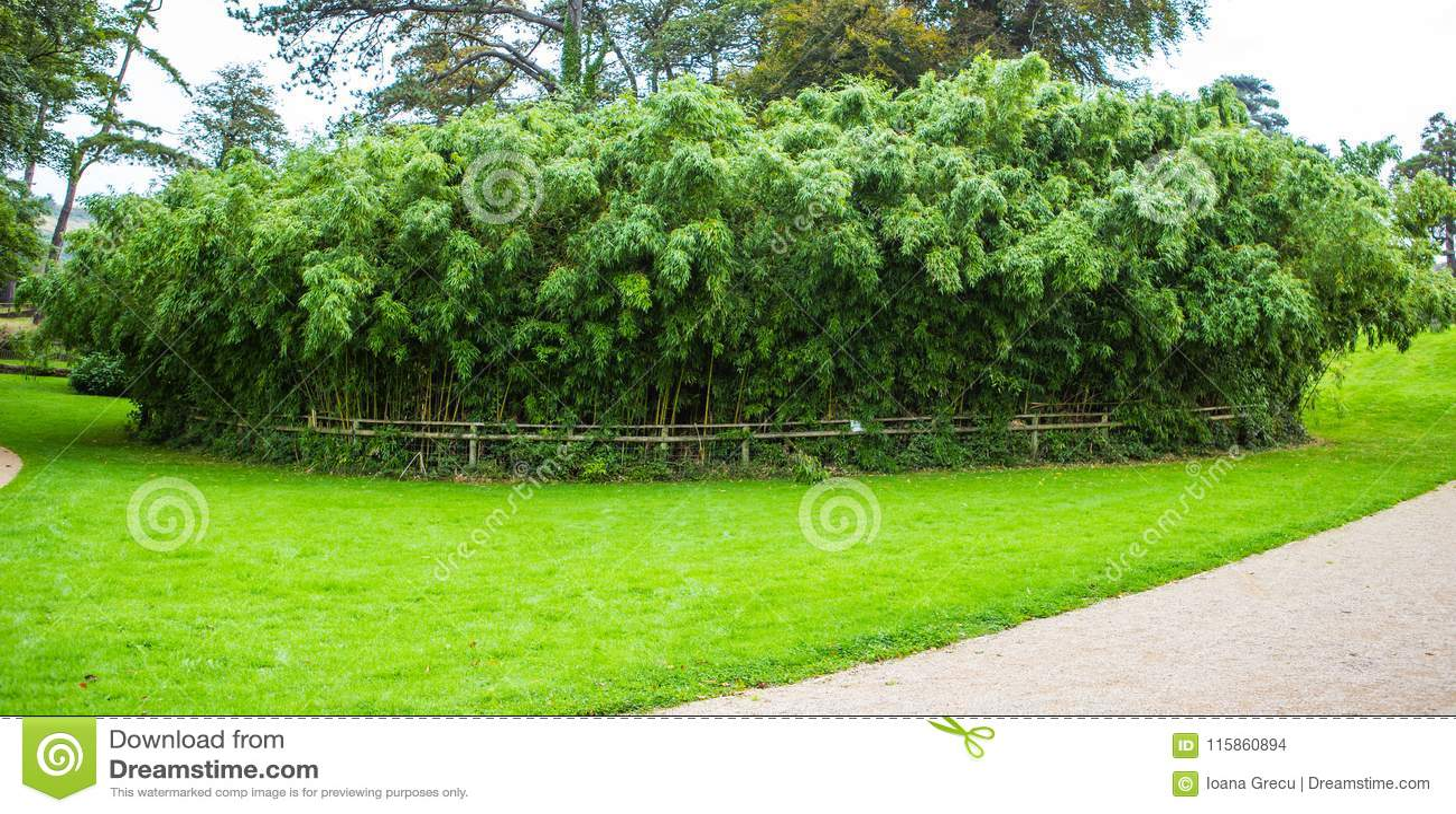 Margam城堡的竹森林从事园艺,鲸鱼