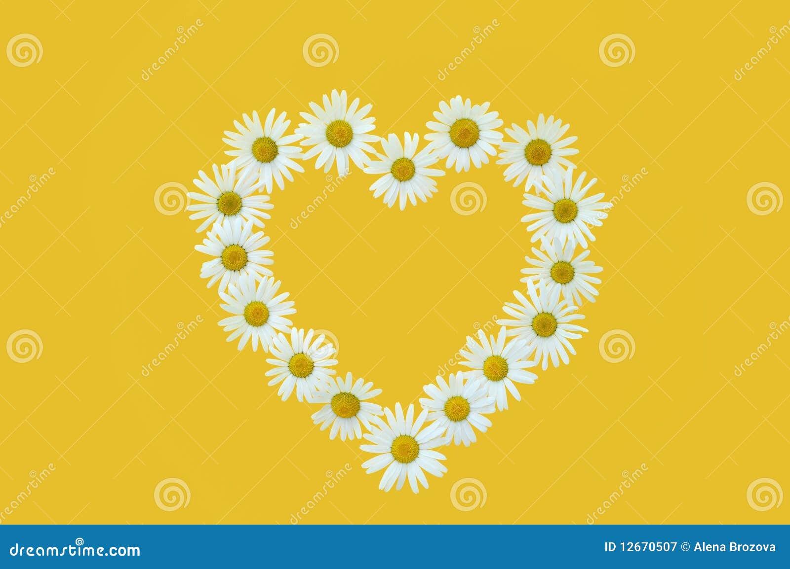 Margarita en dimensión de una variable del amor sobre fondo amarillo