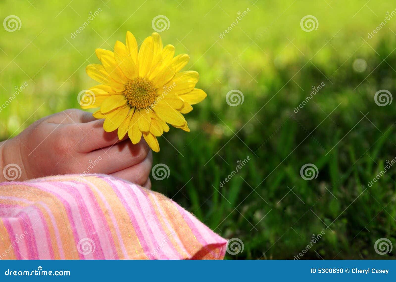 Download Margherita Selezionata Fresca Fotografia Stock - Immagine di bambino, estate: 5300830