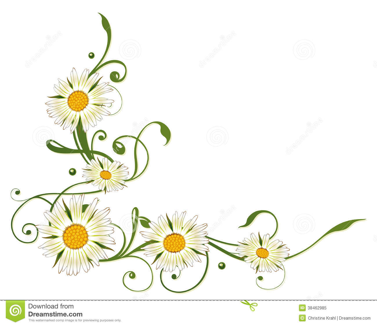 Marguerite Daisy Stock Vector Image Of Flourishes Green