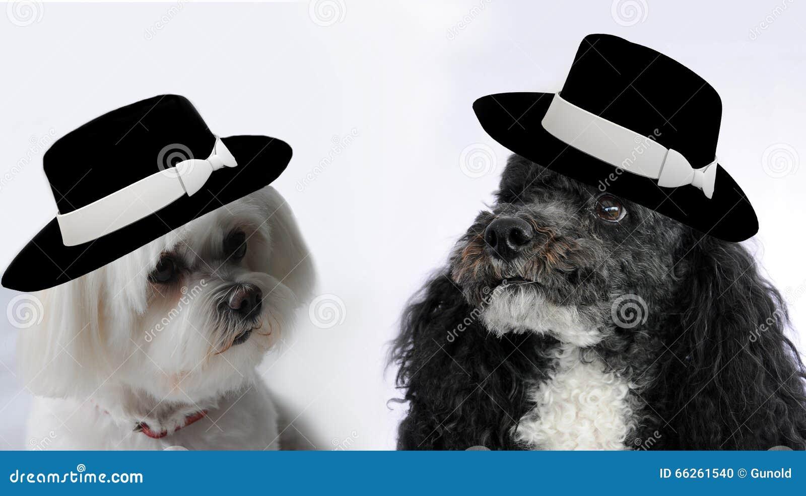 Mariage de chien