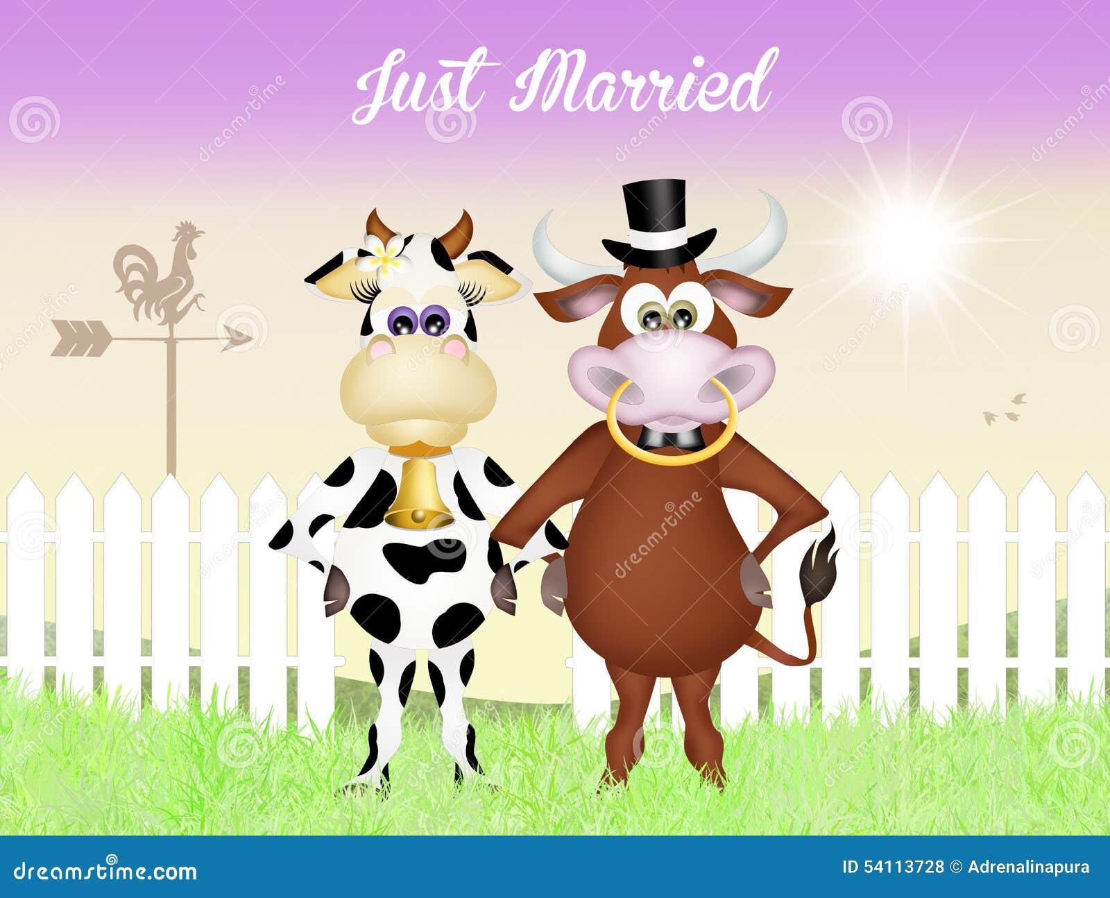 https://thumbs.dreamstime.com/z/mariage-entre-la-vache-et-le-taureau-54113728.jpg