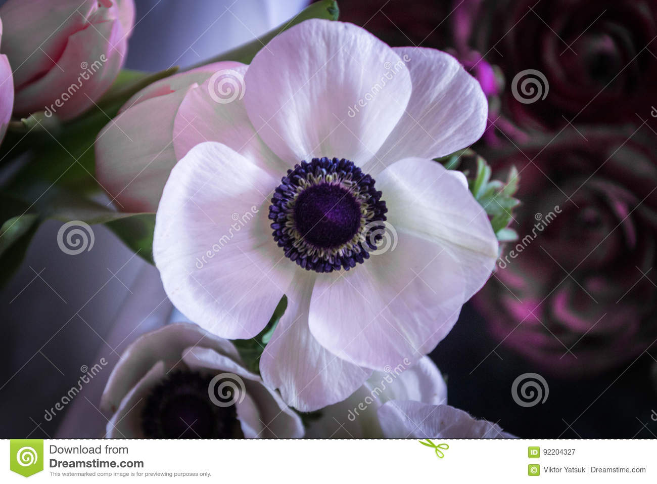 Marianne White Anemore Anemone Means Windflower In Greek Stock