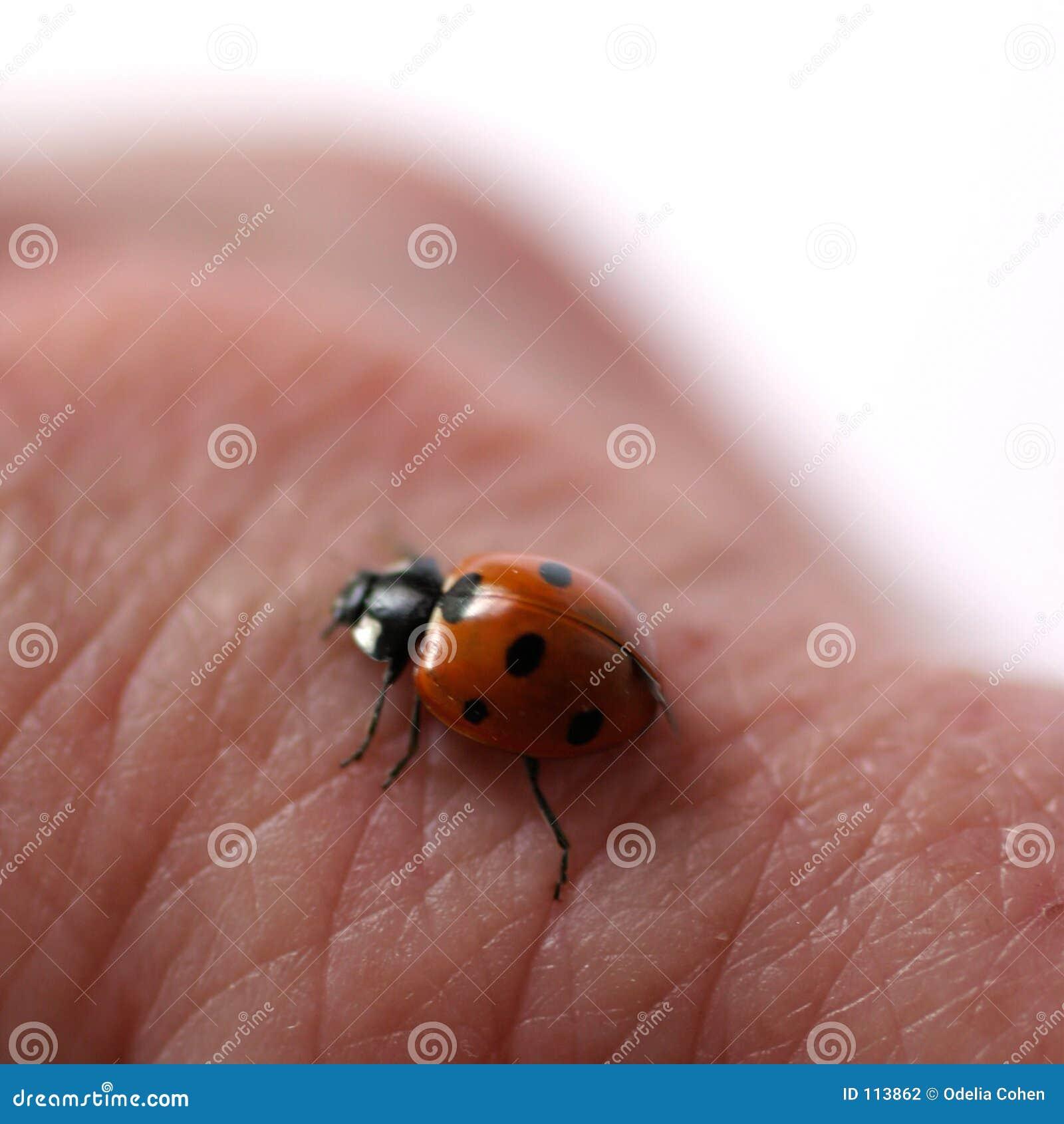 Marienkäfer auf Haut