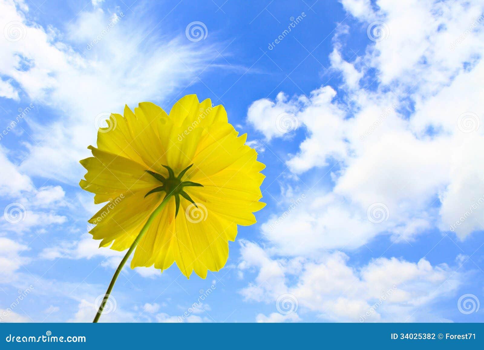 Marigold flowers on blue sky background stock photography image