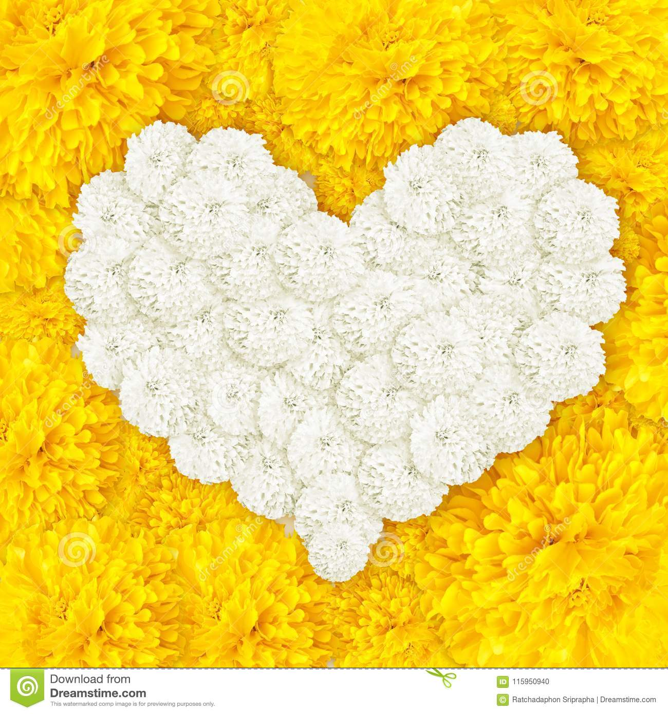 Marigold flowers heart frame stock photo image of floral erecta marigold flowers heart frame and put white marigold colour in center background mightylinksfo