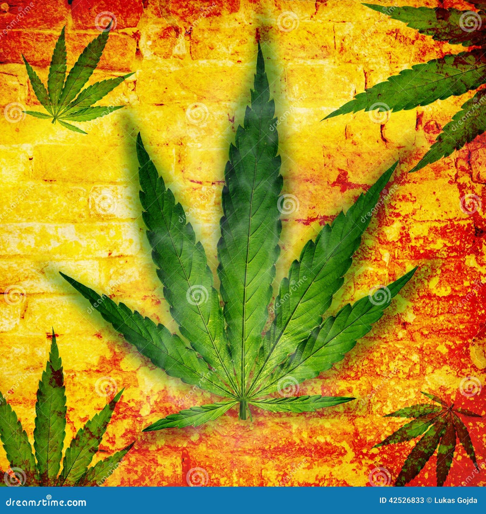 Marihuana liść, marihuany roślina
