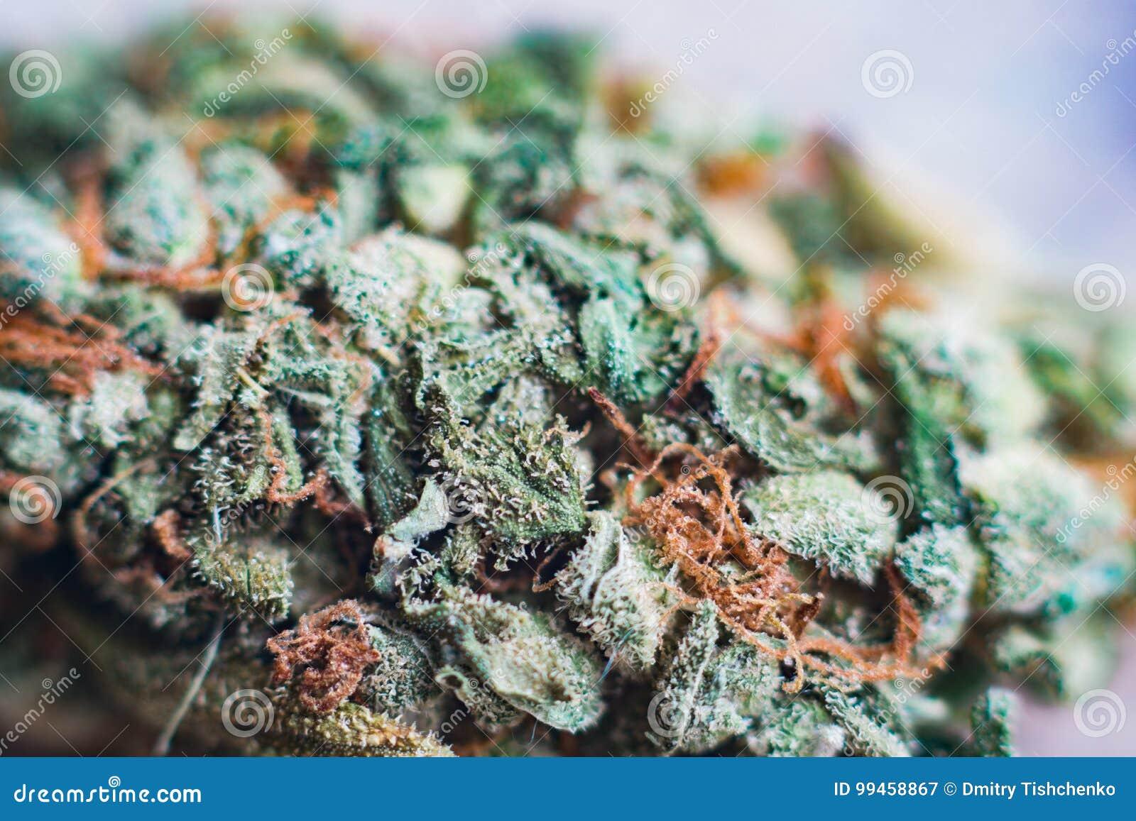 Marijuana Macro Fleur Tangiematic Sativa De Thc De Trichomes De
