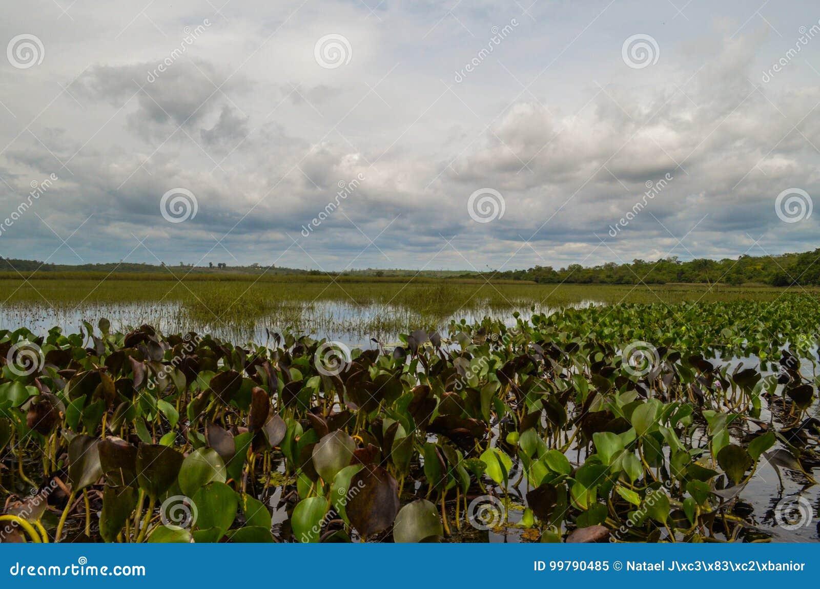 Marimbus湖