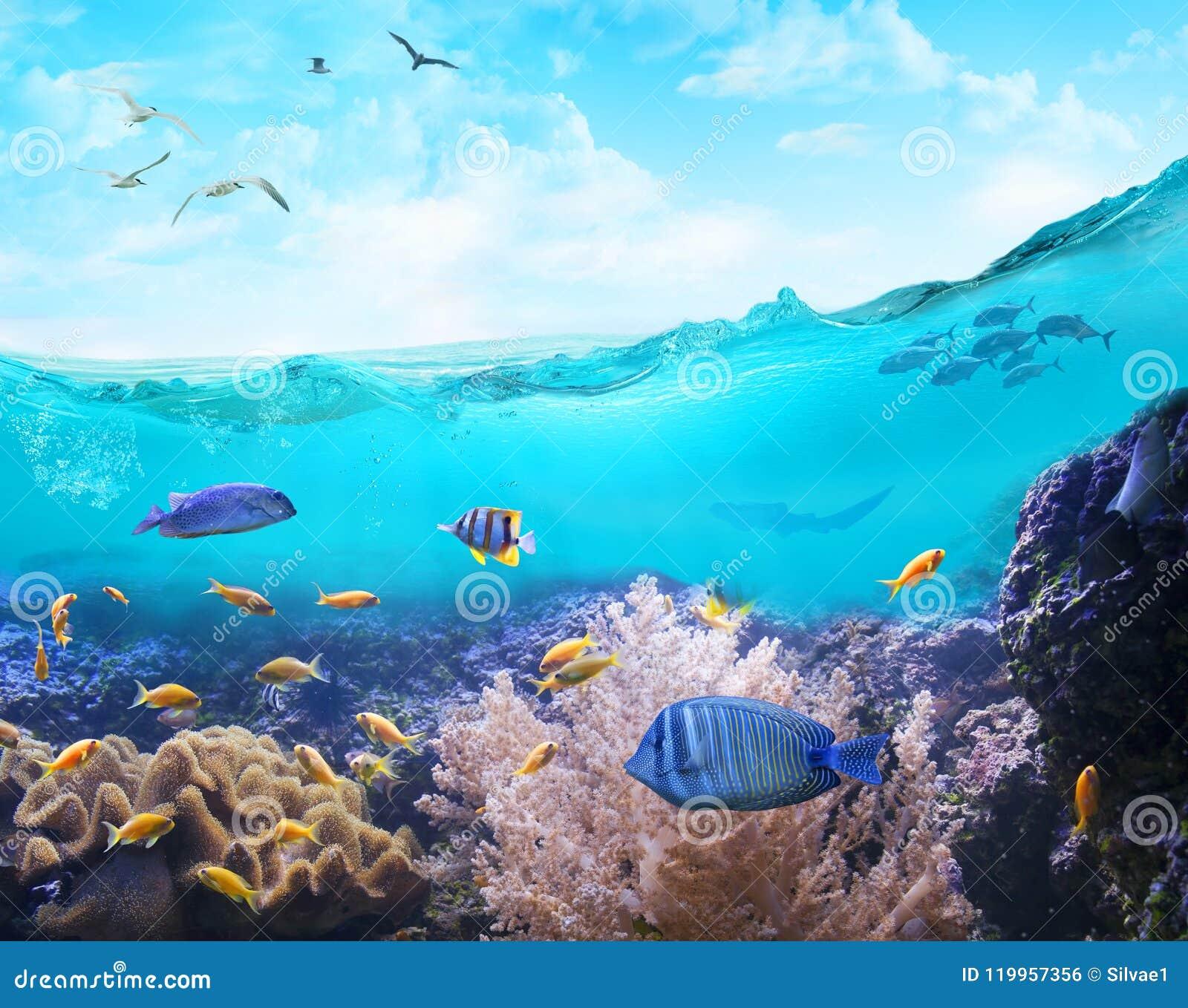 Marin- liv i tropiskt bevattnar