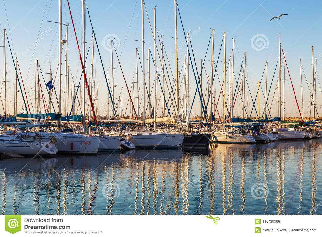 Marina with docked yachts at sunset. Ashdod