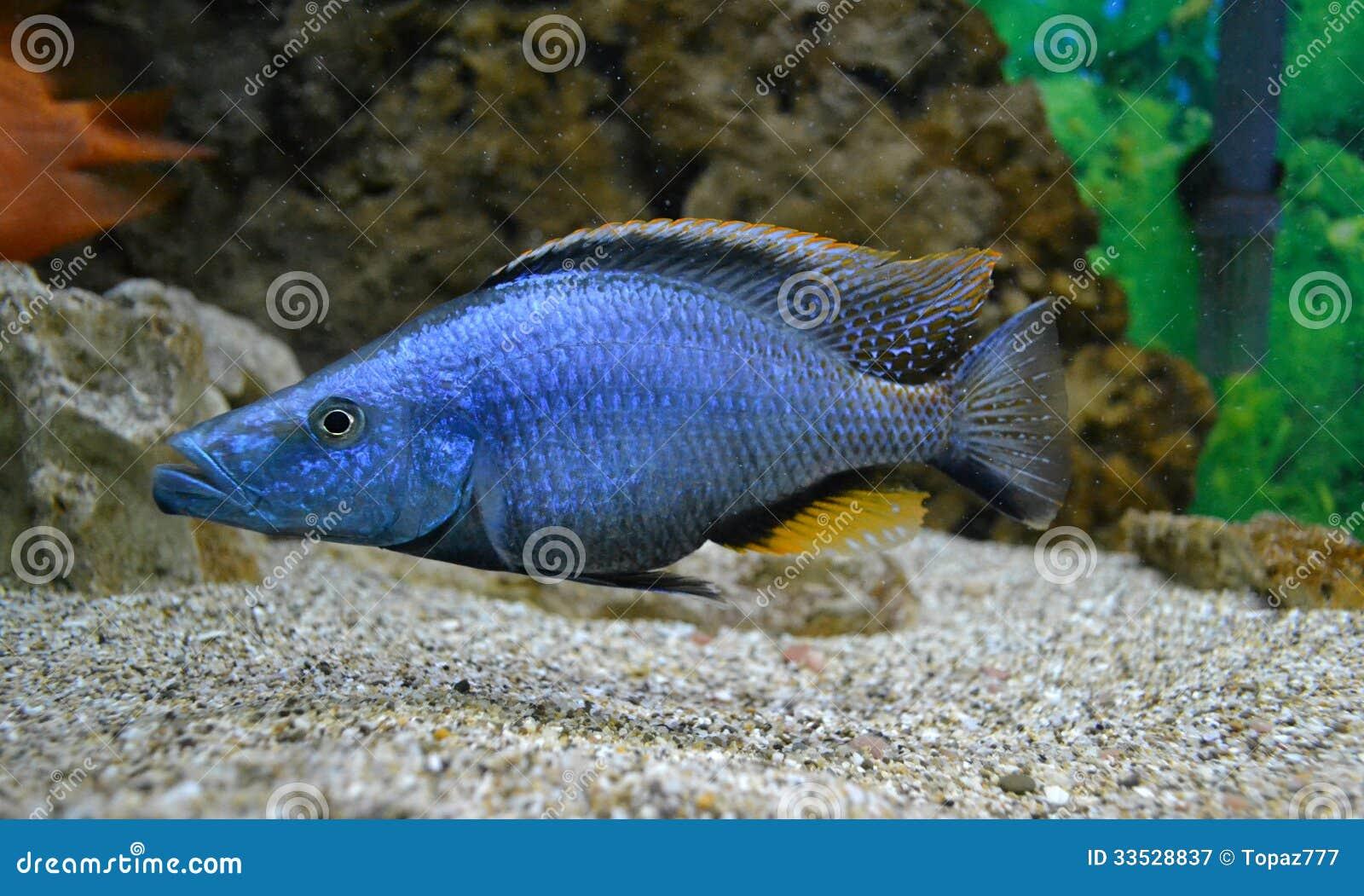 Marine for aquarium fish aquatic.