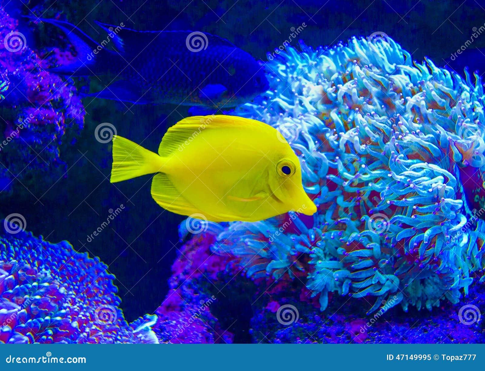 Marine fish in the aquarium stock photo cartoondealer for Marine aquarium fish
