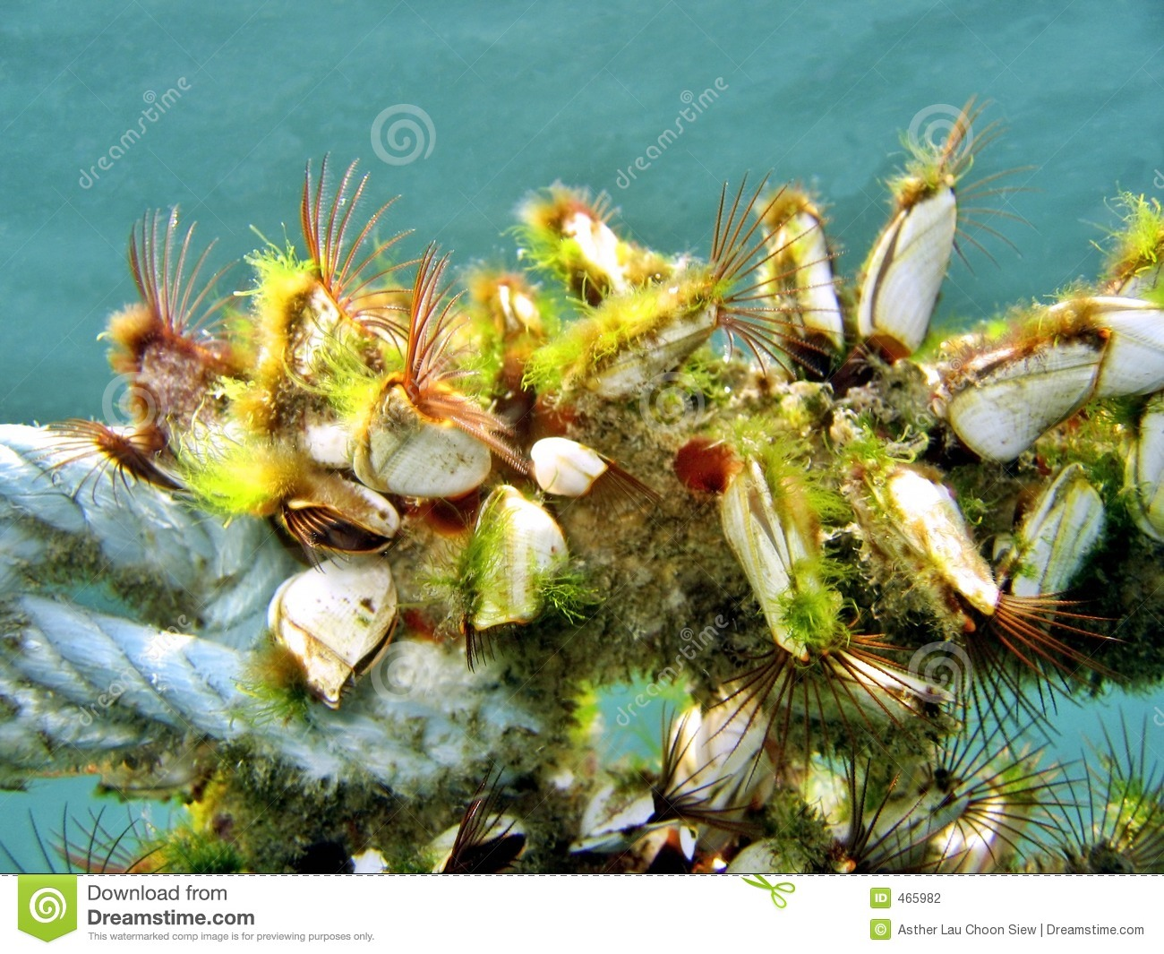 Marine Colony On A Rope