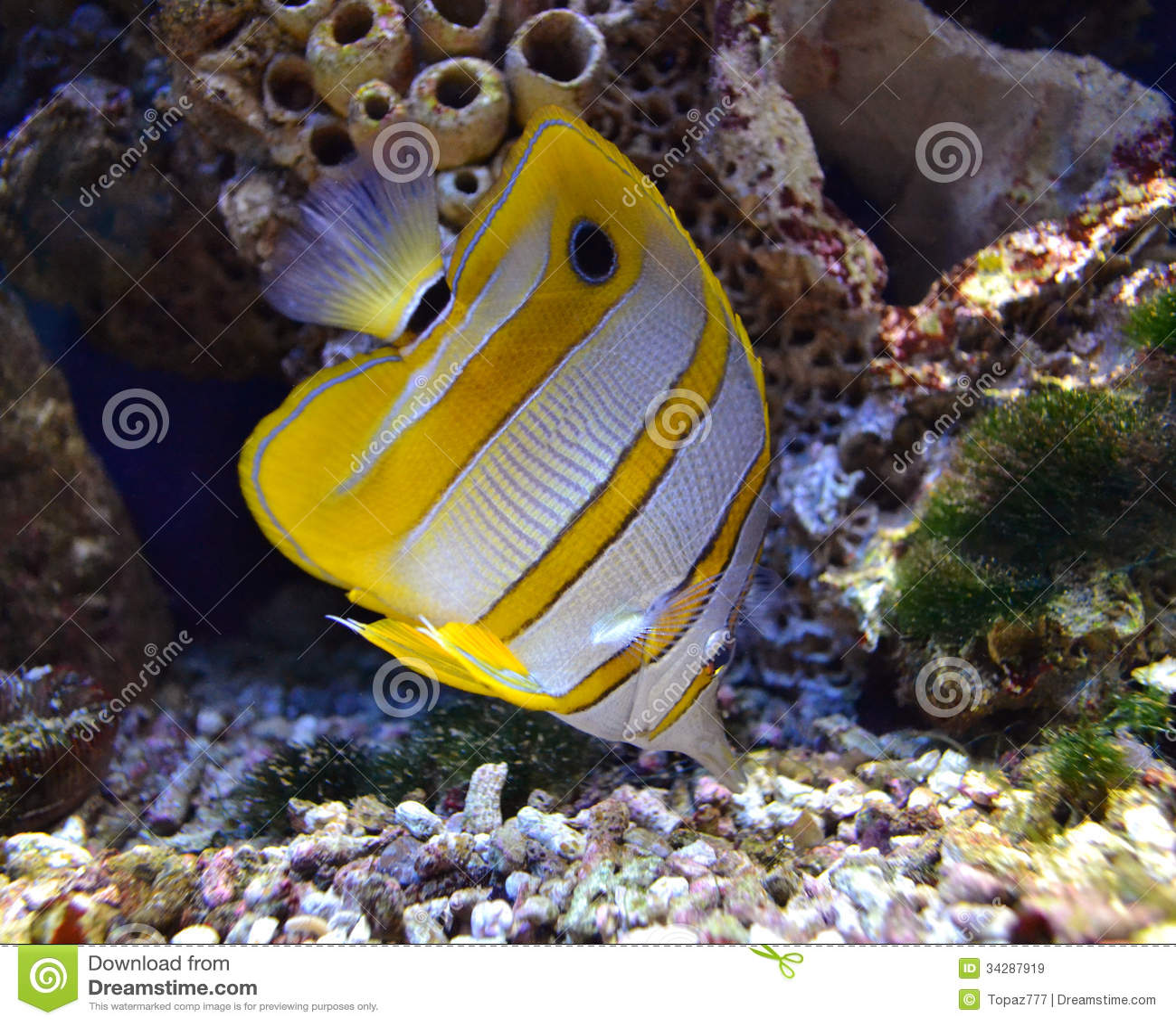 Marine aquarium fish aquatic tropical aquarium.