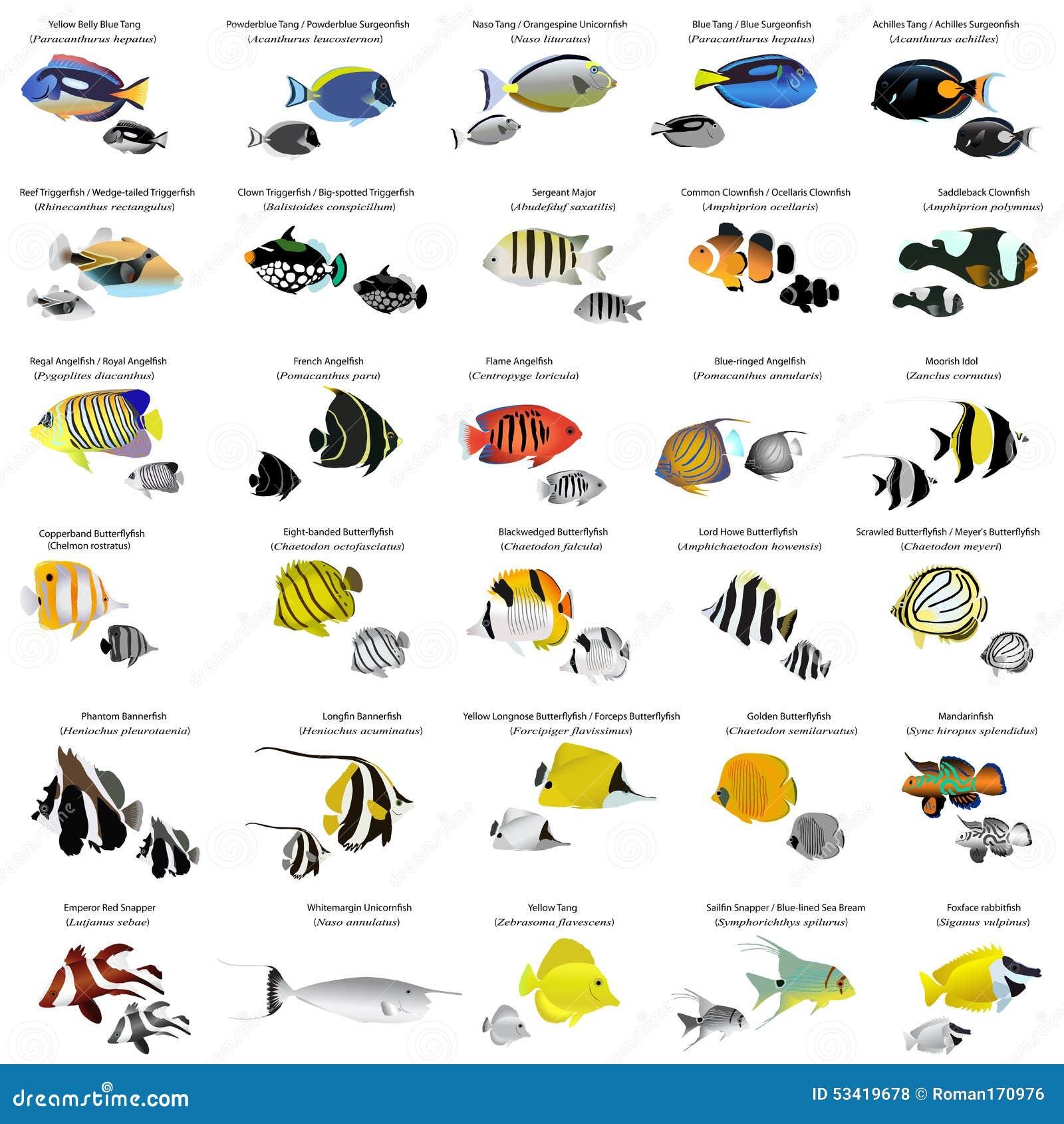 Designer clownfish chart - photo#17