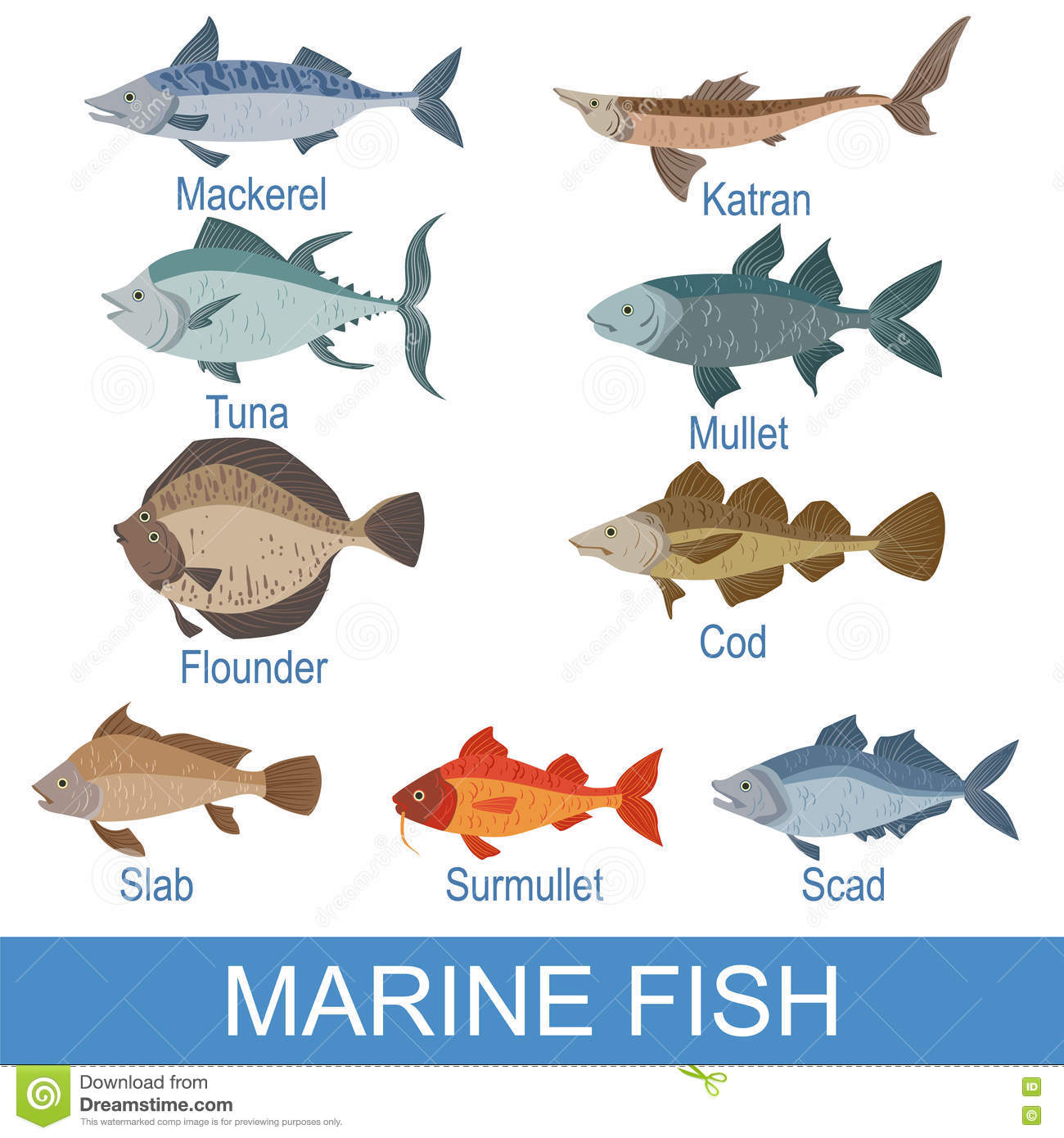 Fish images with names for Names for a fish