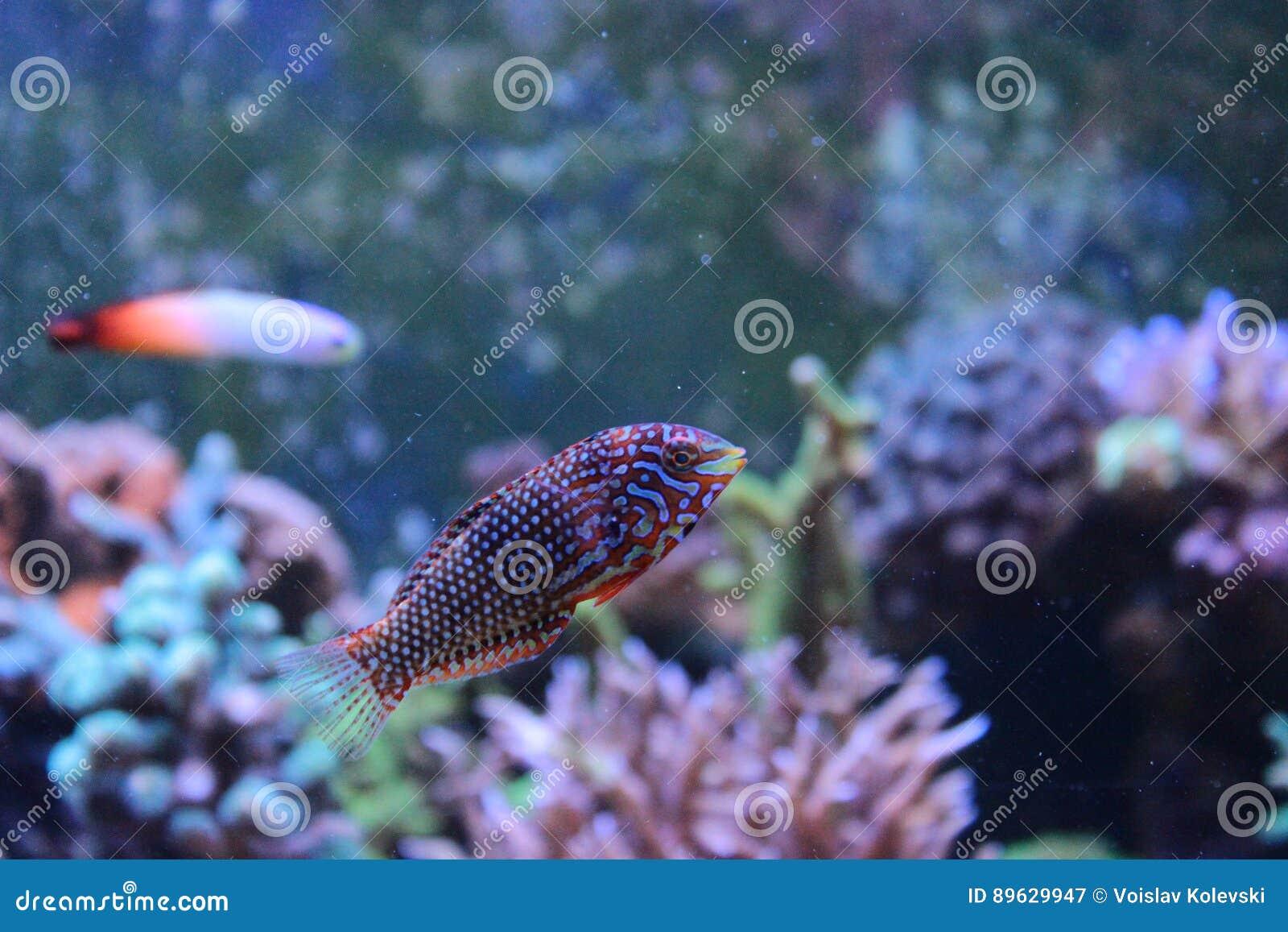 Marine Fish a isolé