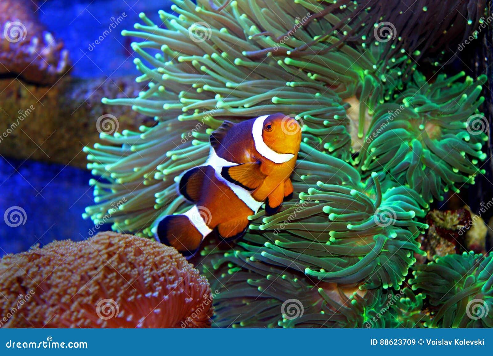 Marine Fish isolated