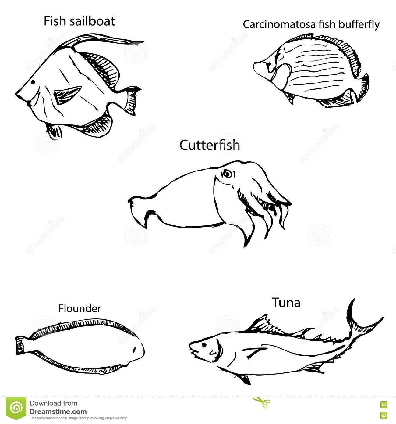 Marine inhabitants with names pencil sketch by hand
