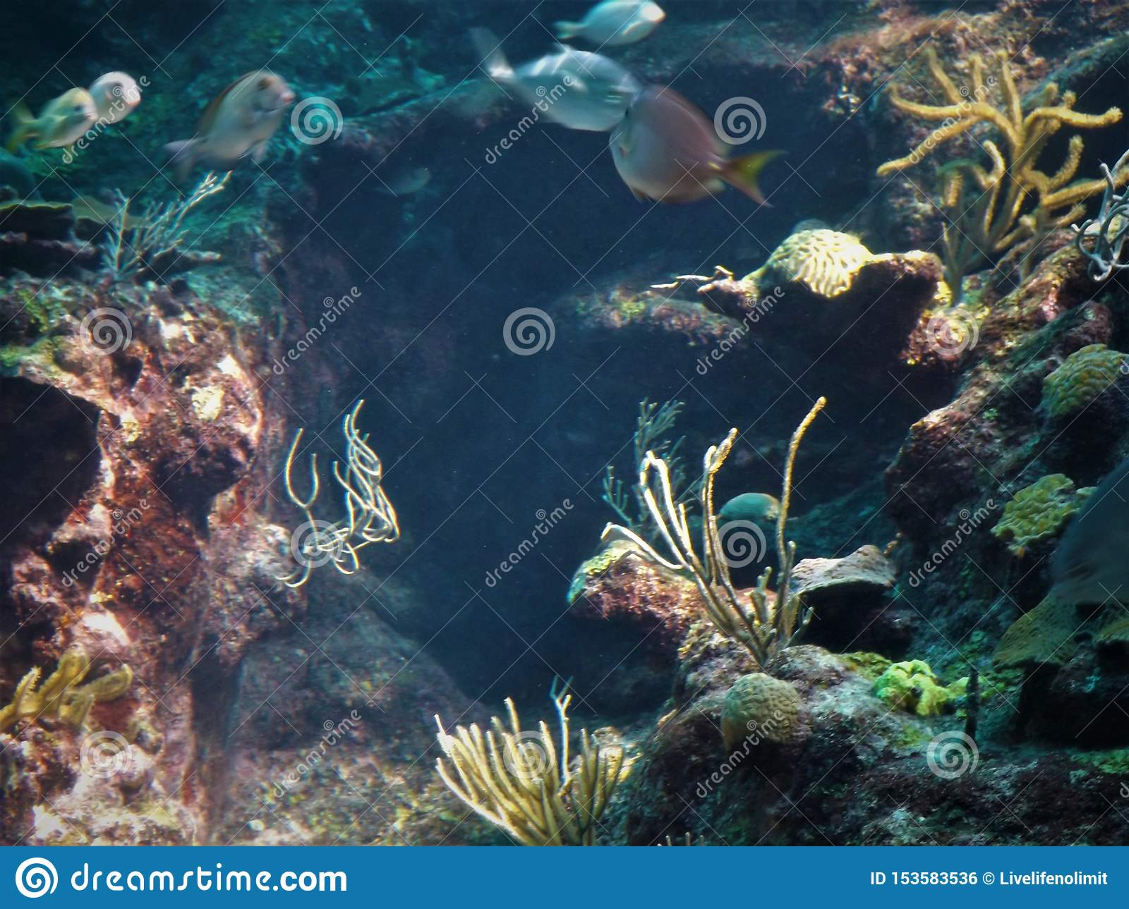 Marine Life Mexico Coral Reef