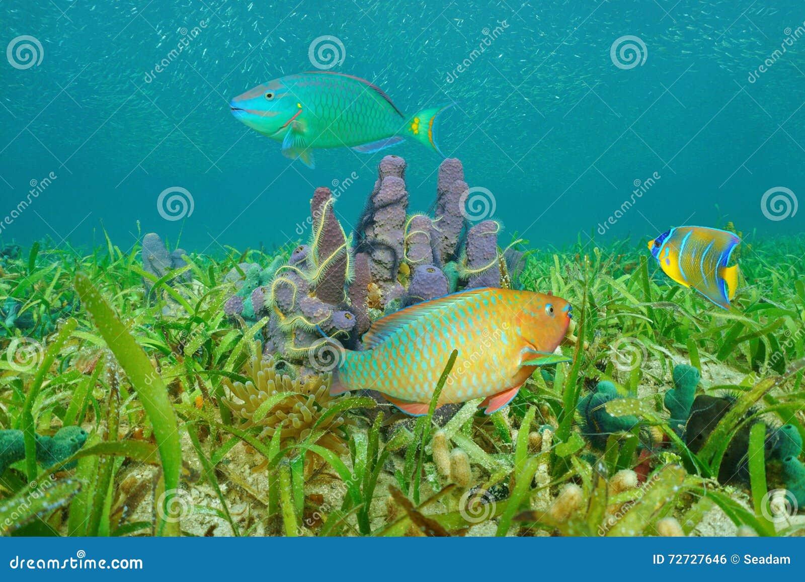 Marine Life On Seabed Colorful Fish Caribbean Sea Stock Photo ...
