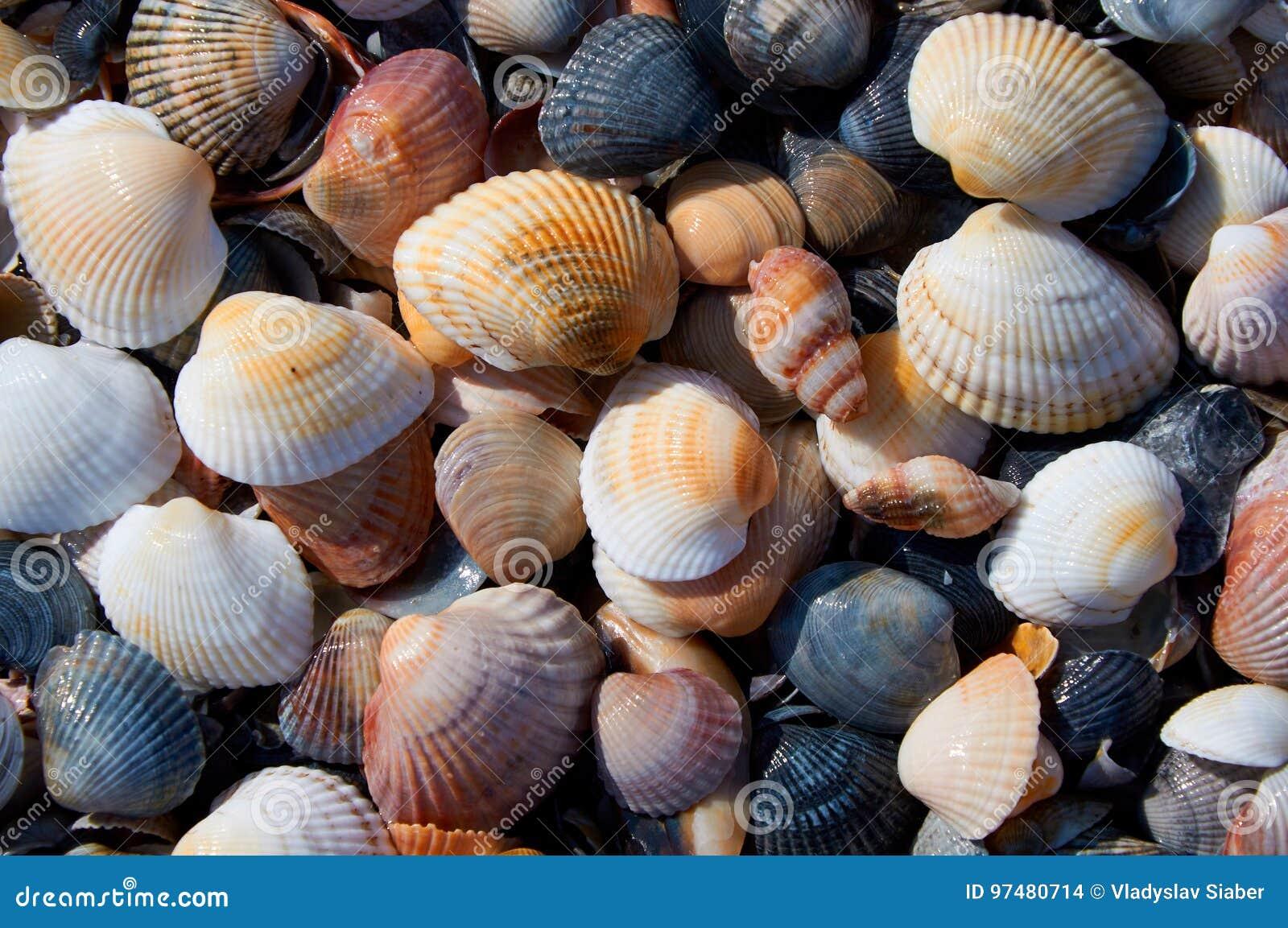 Marine Theme Background With Seashells Over Sand Close Up Stock