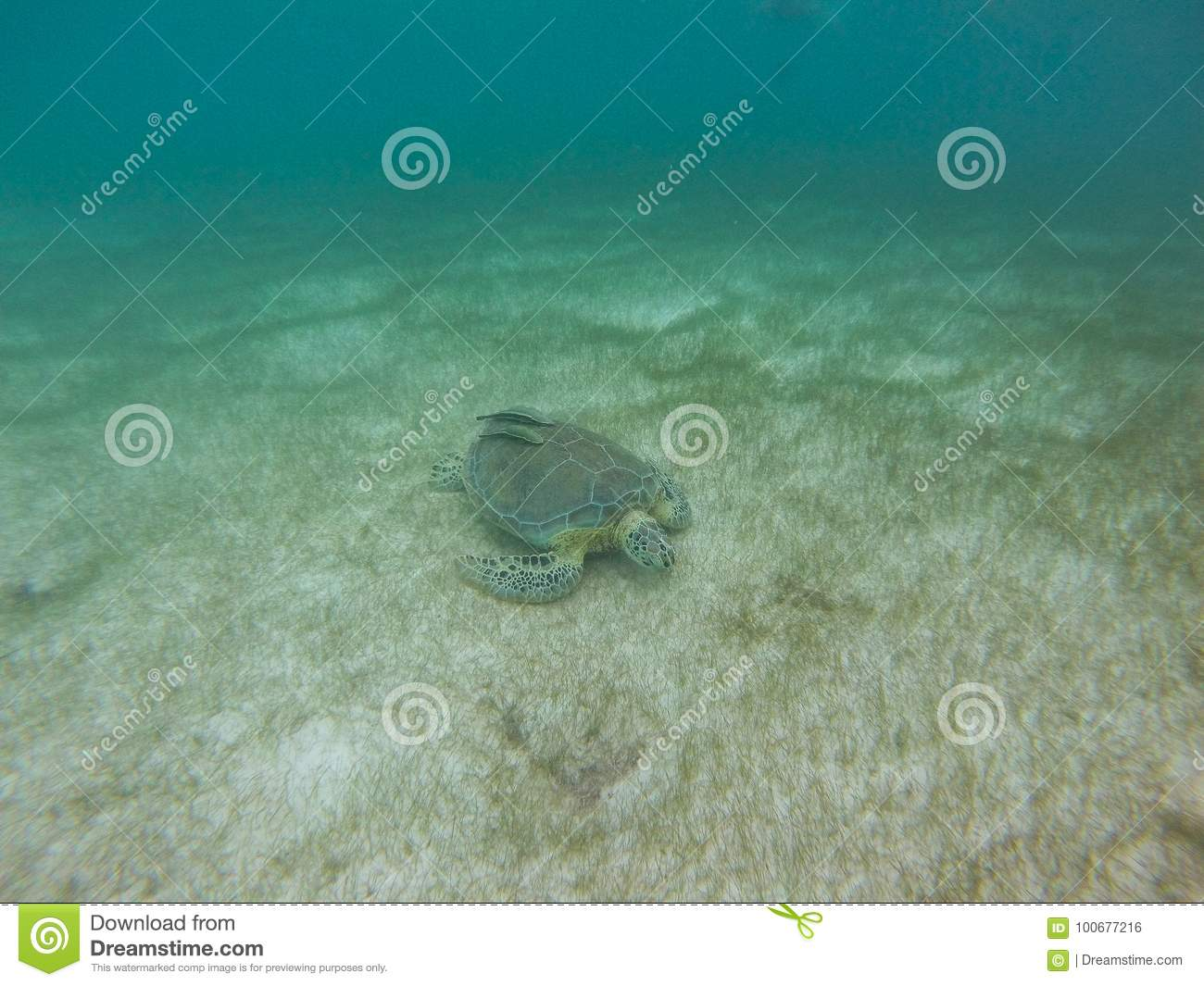 Marine Turtle in Mexico