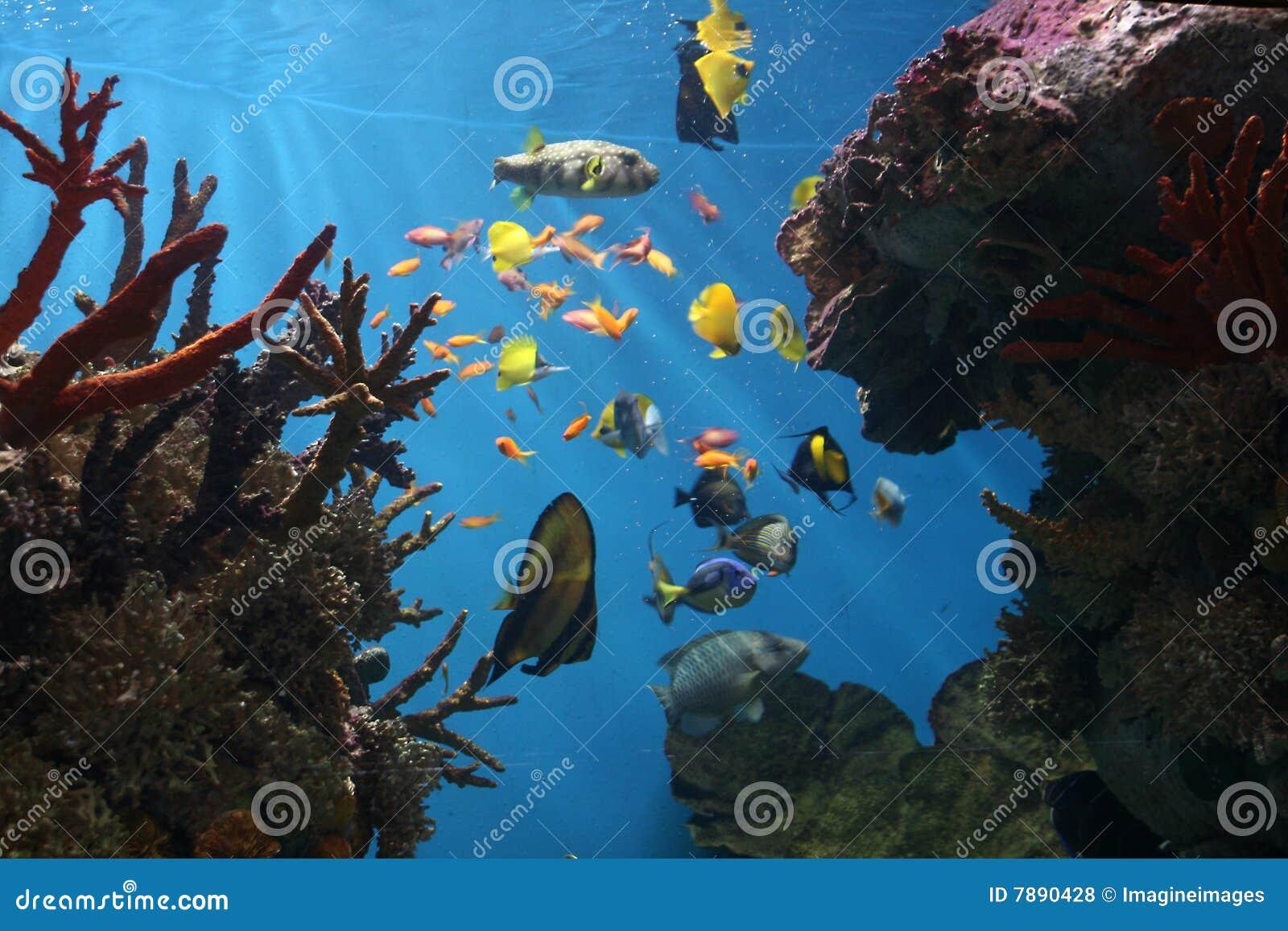 Marinefische - tropisches Korallenriff