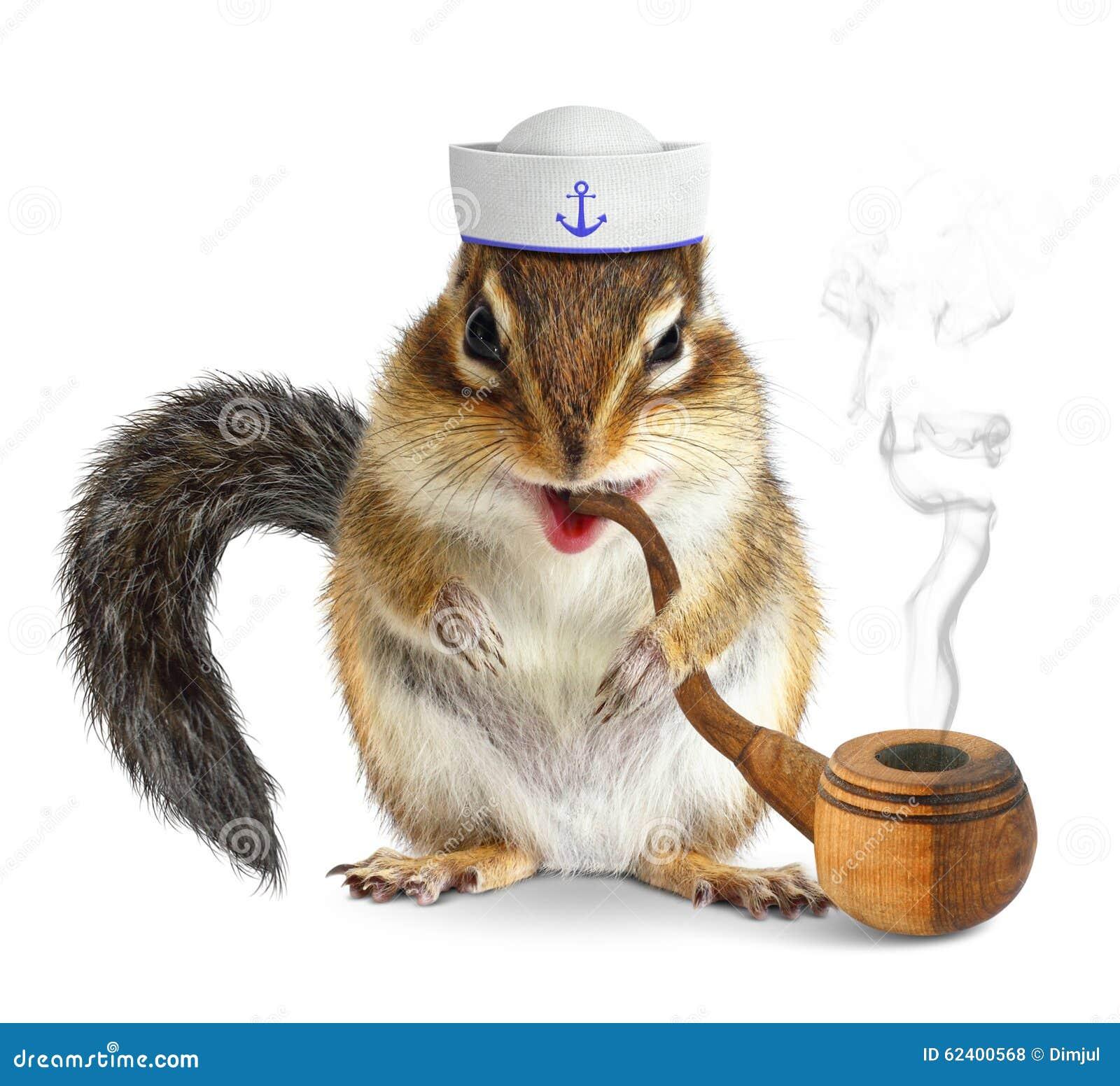 Marinero animal divertido, ardilla con el tubo de tabaco y sombrero del marino