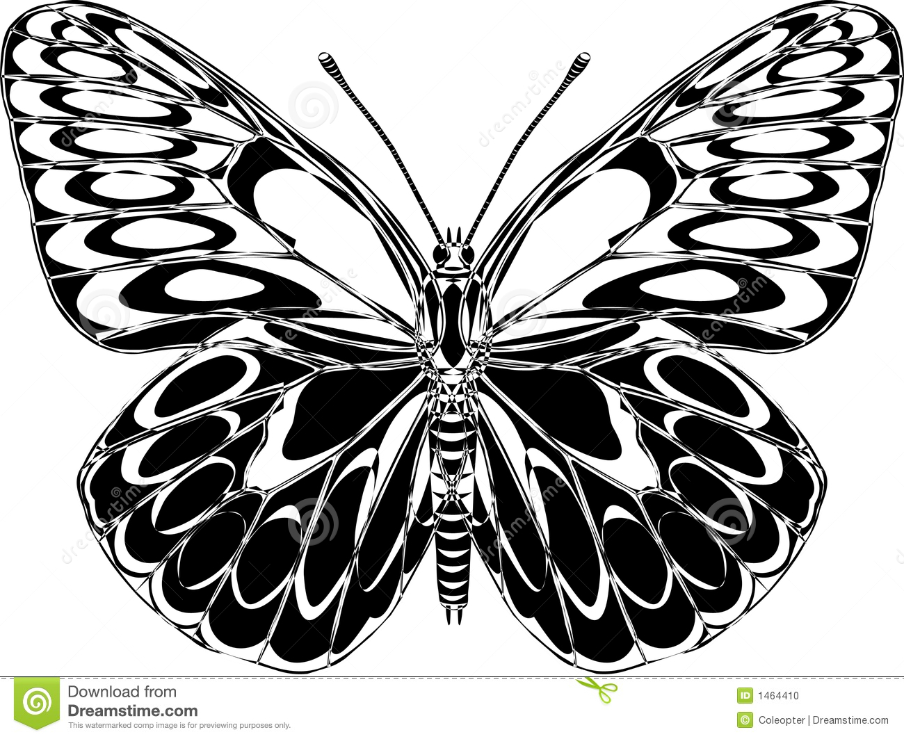 Butterfly Drawings Black and White