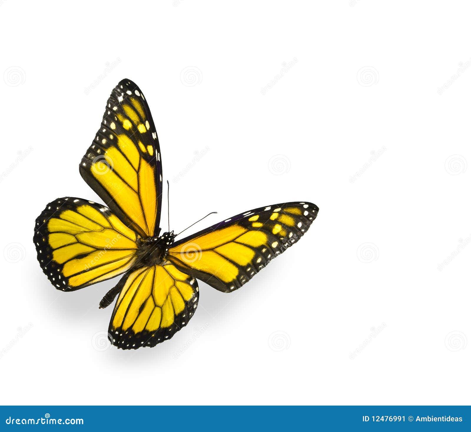 Rainbow Butterfly Logo