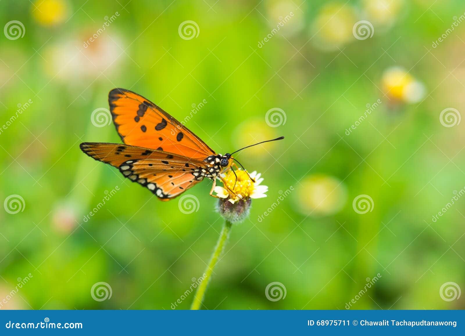 Mariposa anaranjada en la pequeña flor