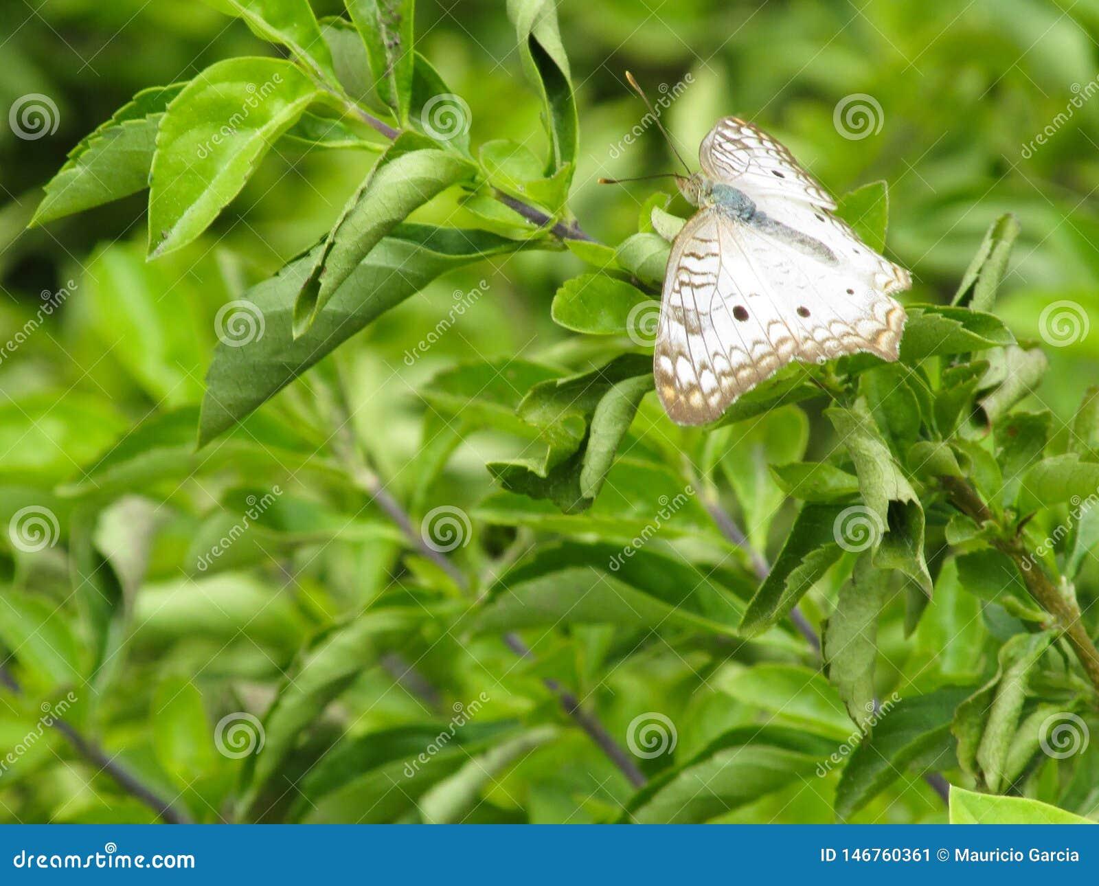 Mariposa Blanca Marrón En Plantas Verdes