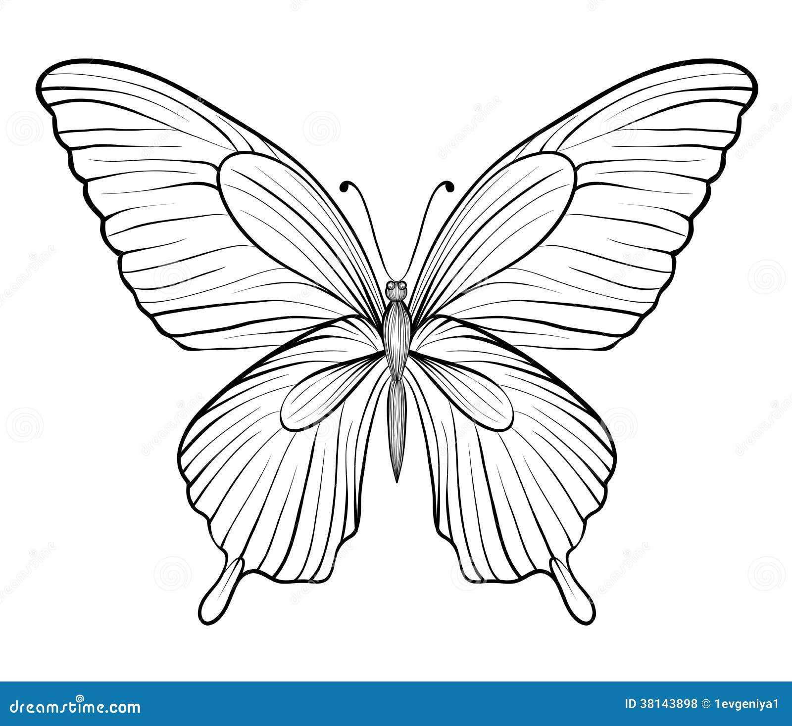 mariposa blanco y negro gráfica uno aislado en blanco