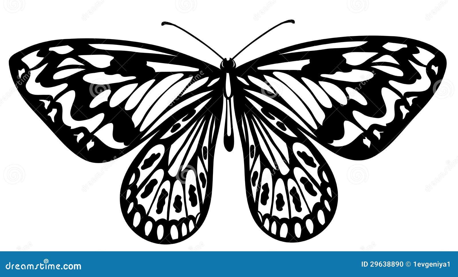 Mariposa Blanco Y Negro Hermosa Aislada En Blanco