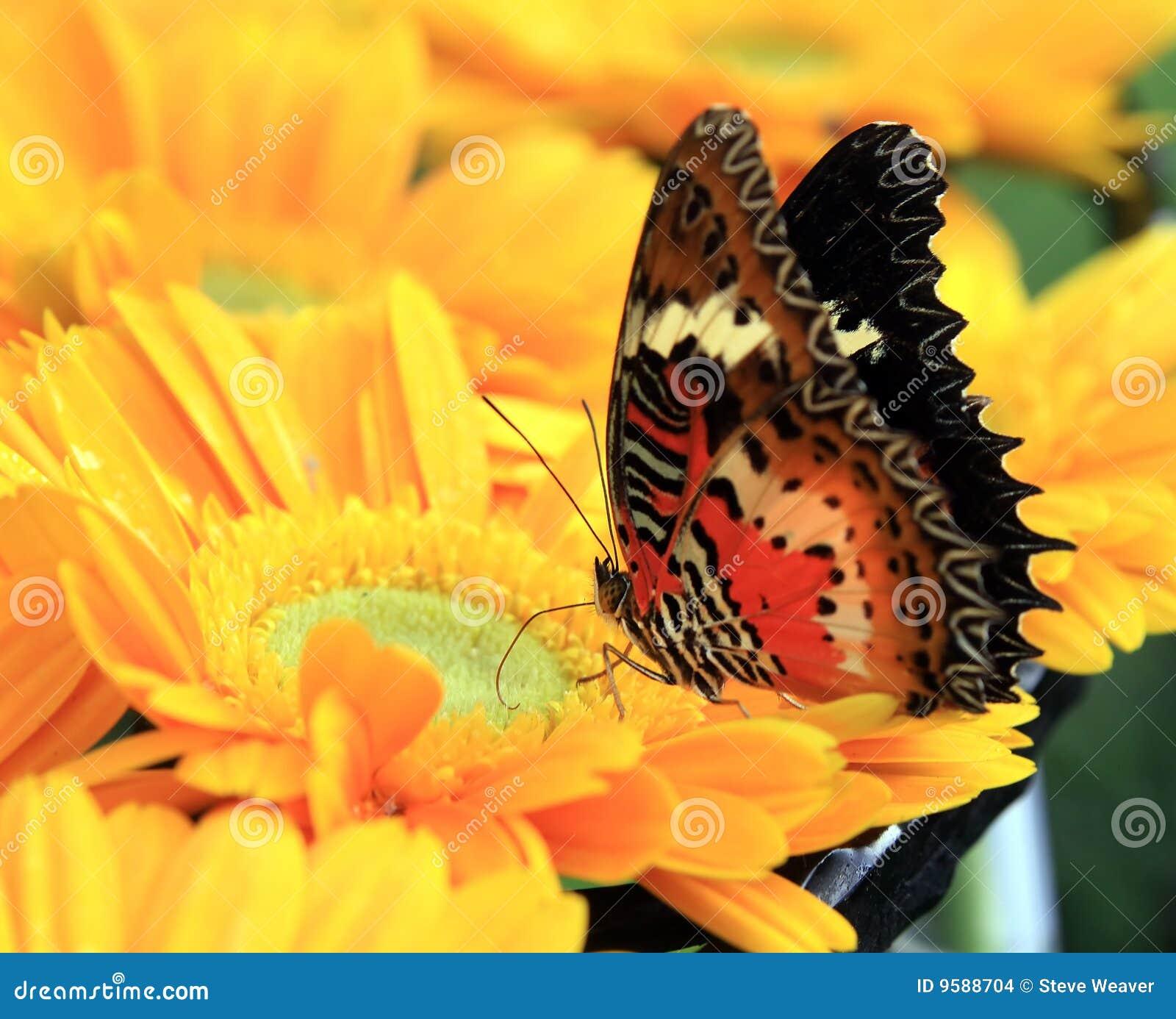 Mariposa colorida en la flor