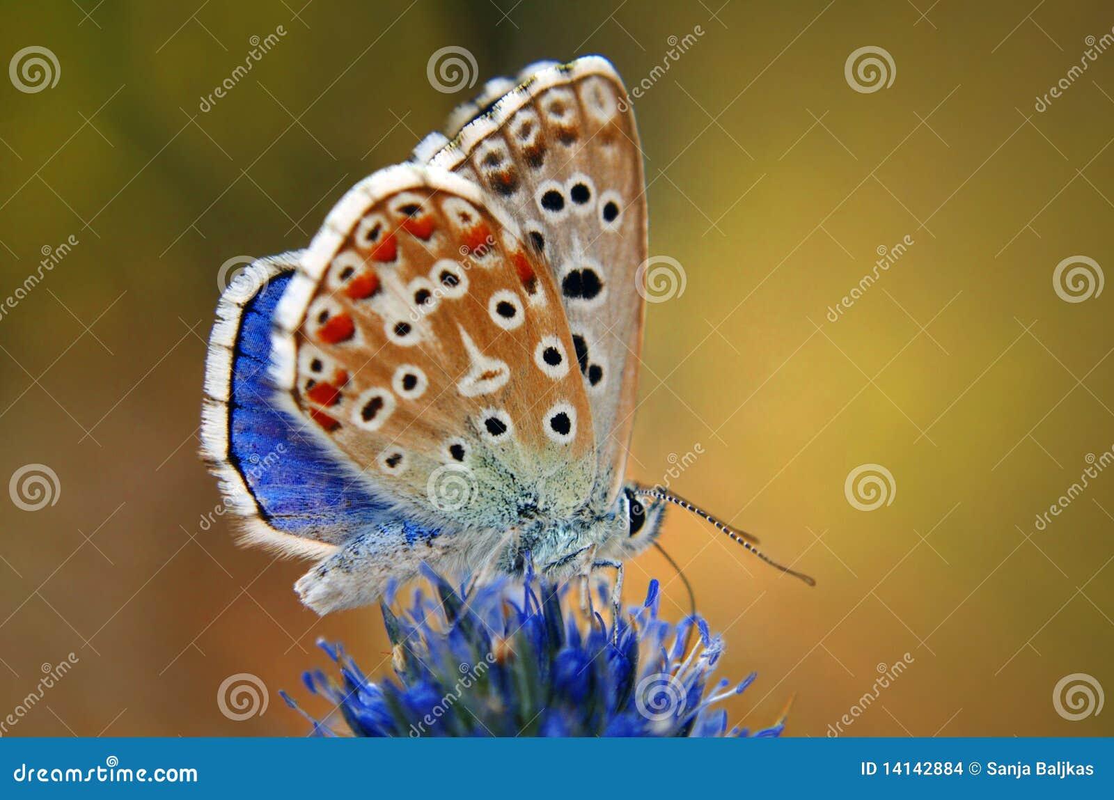 Mariposa colorida en una flor
