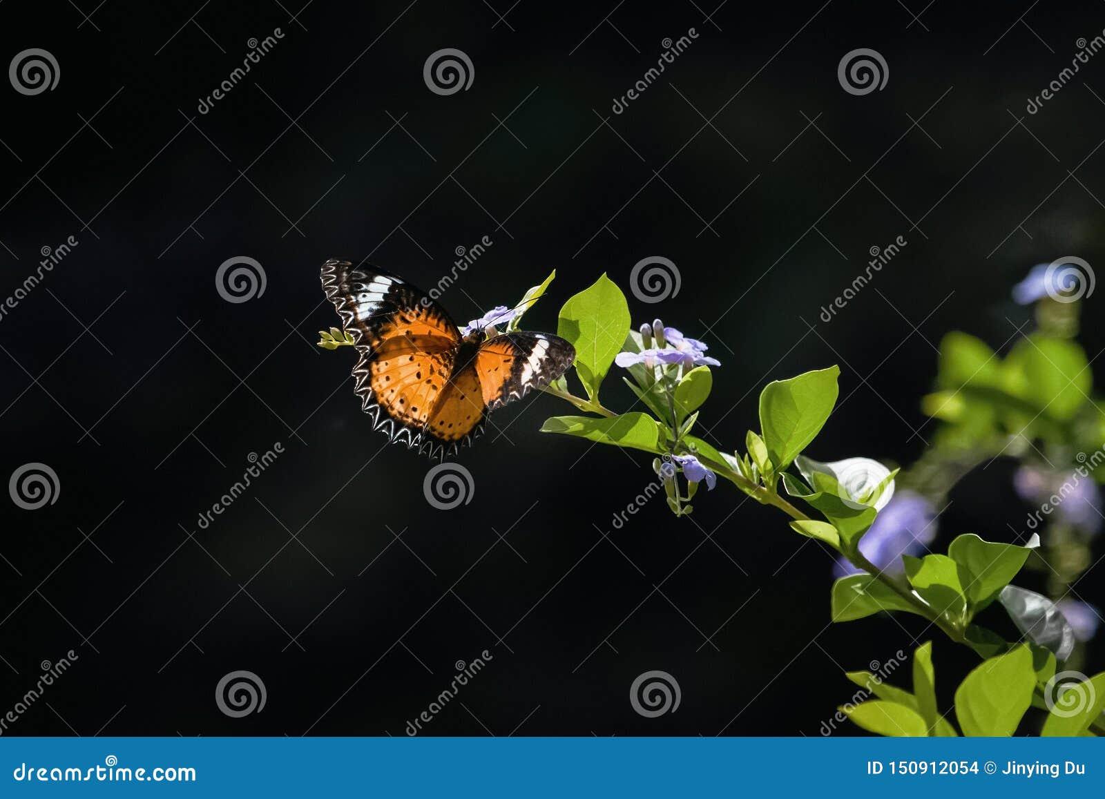 Mariposa colorida que cuelga en las flores
