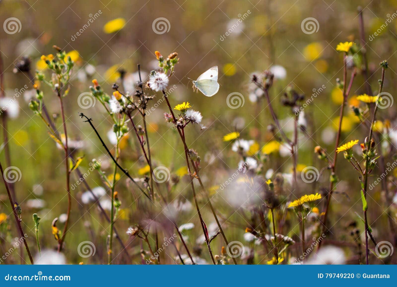 Mariposa del vuelo en un prado