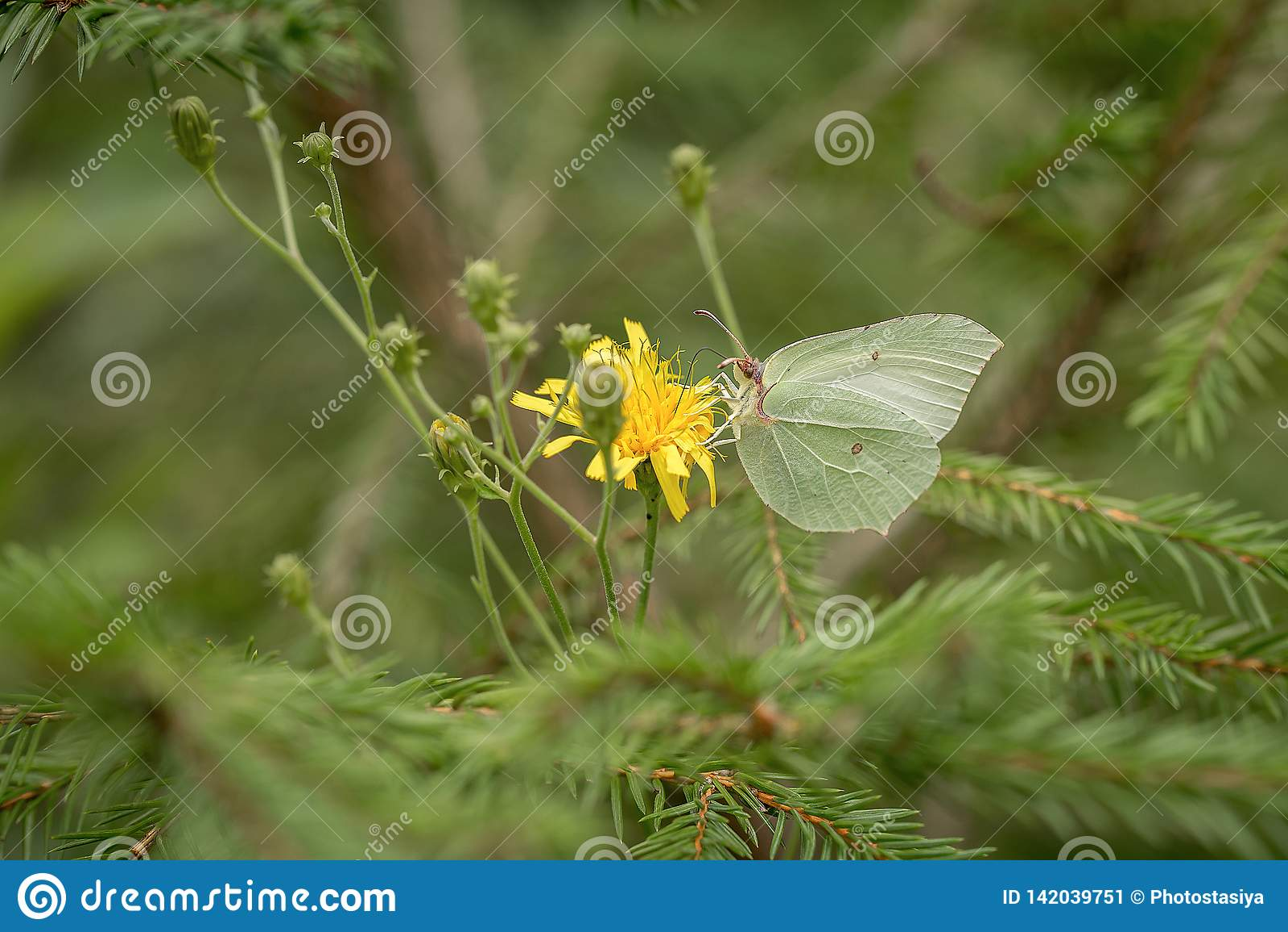 Mariposa en el campo verde