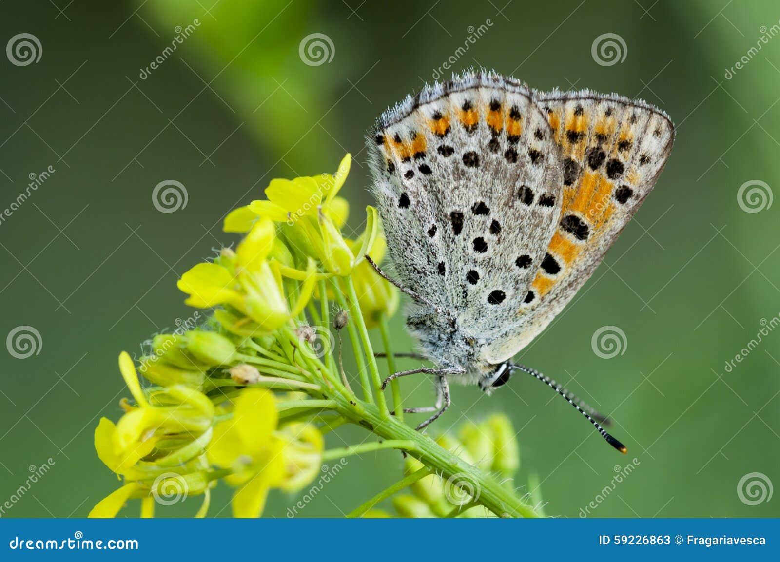 Download Mariposa en la flor imagen de archivo. Imagen de colorido - 59226863