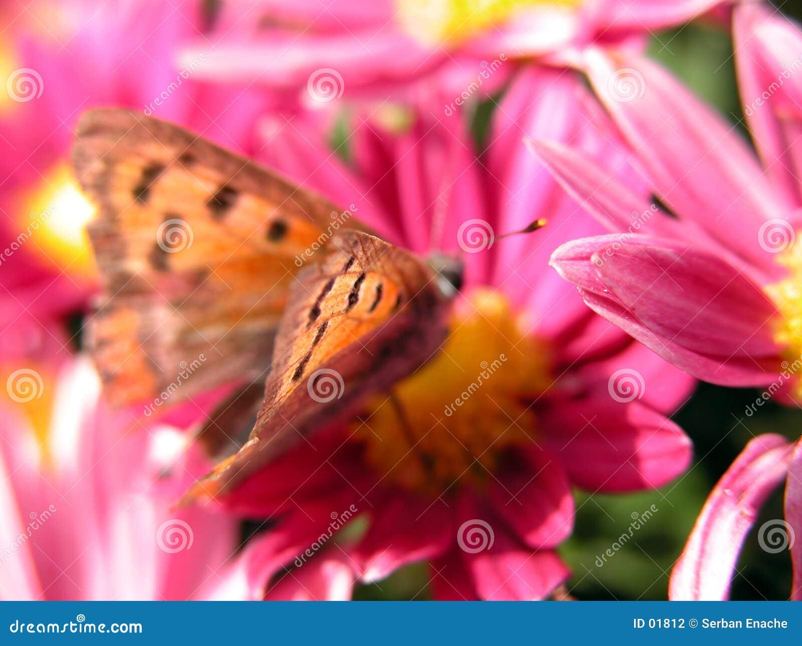 Mariposa en la flor roja