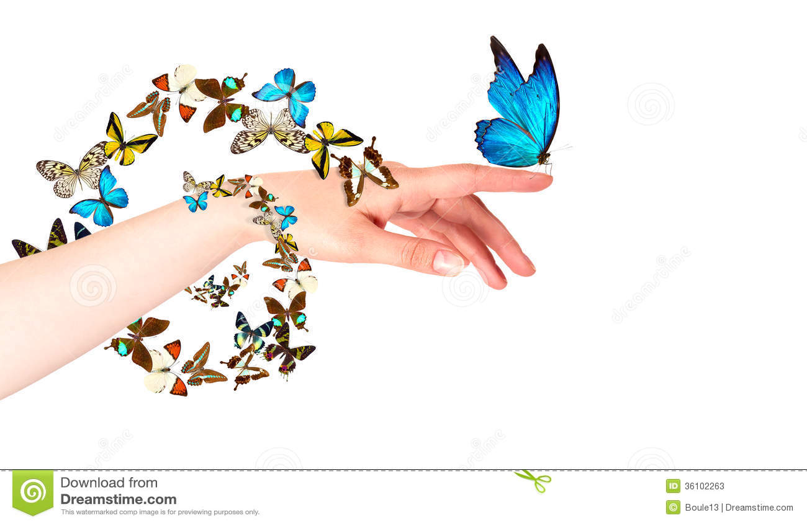 Mariposa Con Brillo Y Movimiento | apexwallpapers.com