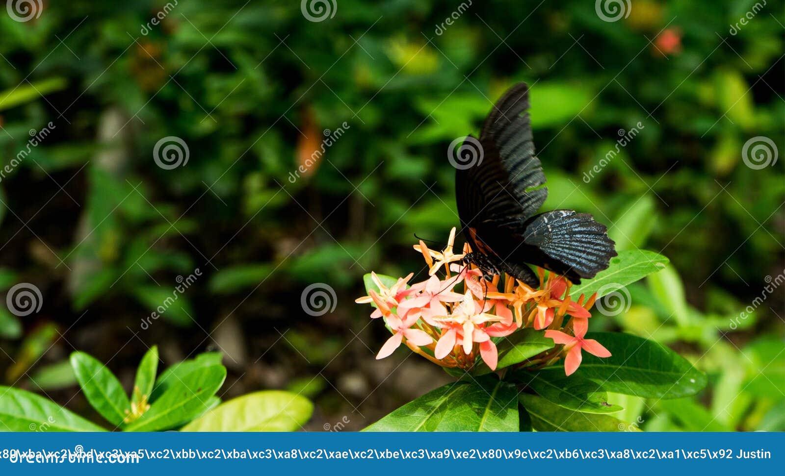 Mariposa en naturaleza