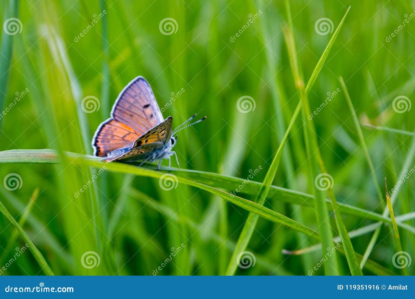 Mariposa en una hierba