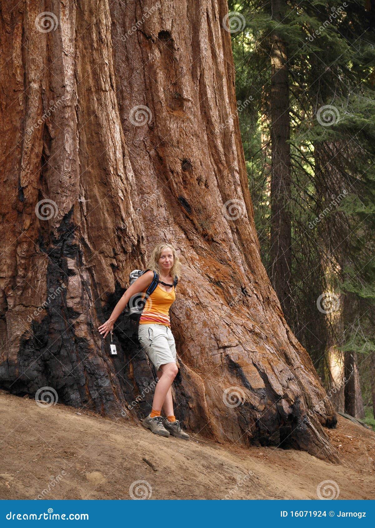 Mariposa Grove Redwoods